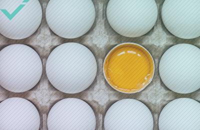 Norwegisches Team sitzt nach Übersetzungsfehler auf 15.000 Eiern